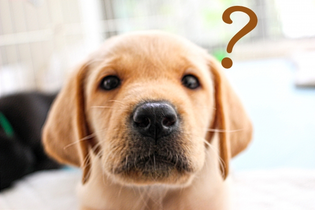 dogsquestions